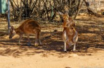Alice Springs – MacDonnell Ranges